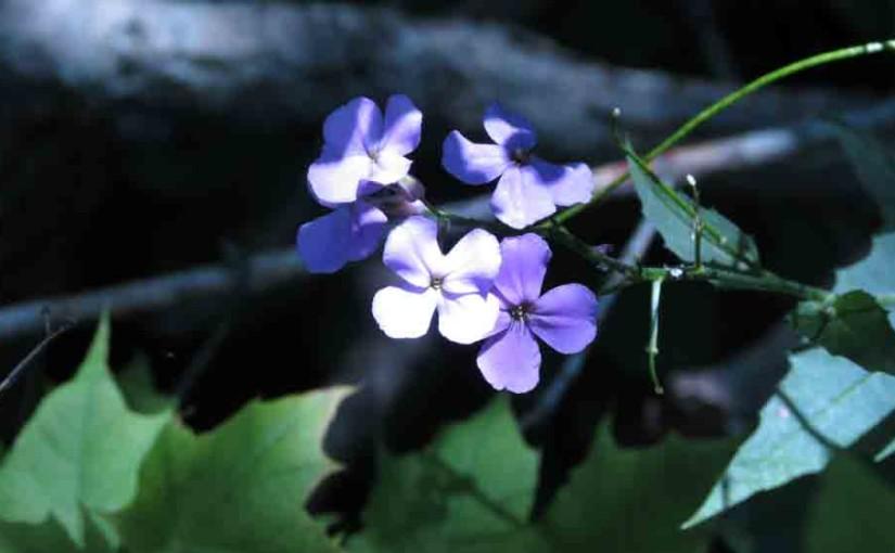 الفلوكس الزهور