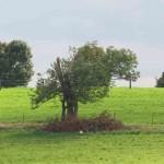 arbres à la ferme.