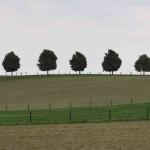 الأشجار العقارية - شجرة القيقب المناظر الطبيعية