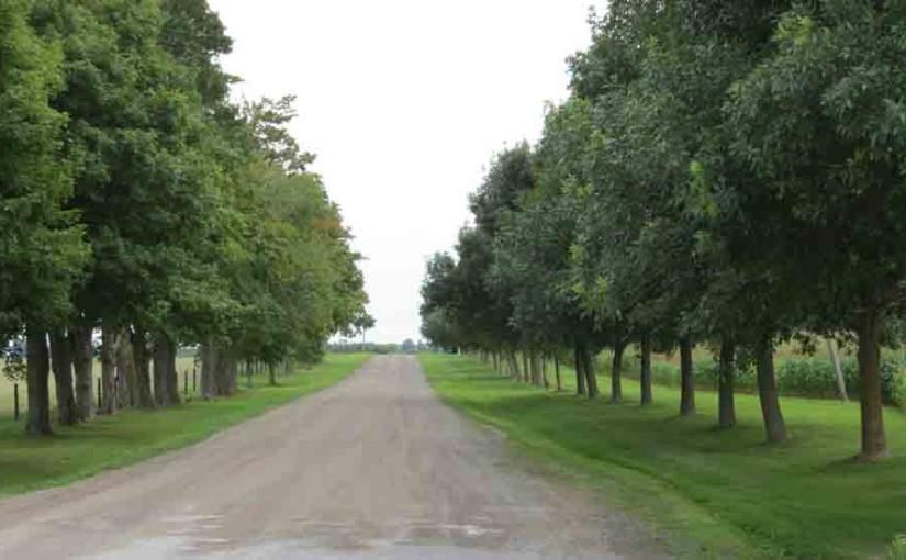 Maple Tree Road