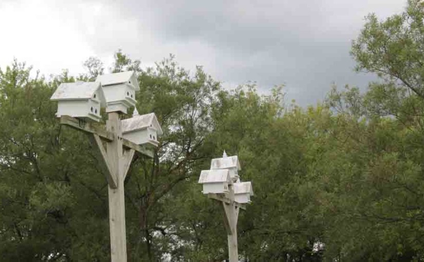 Wood Bird Houses-purplemartin