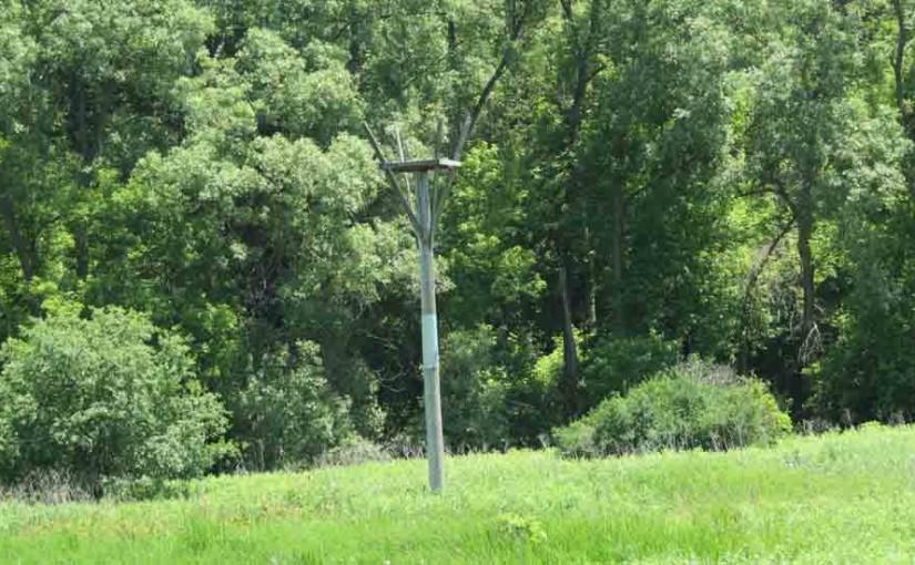 Wooden Osprey Nesting Platform
