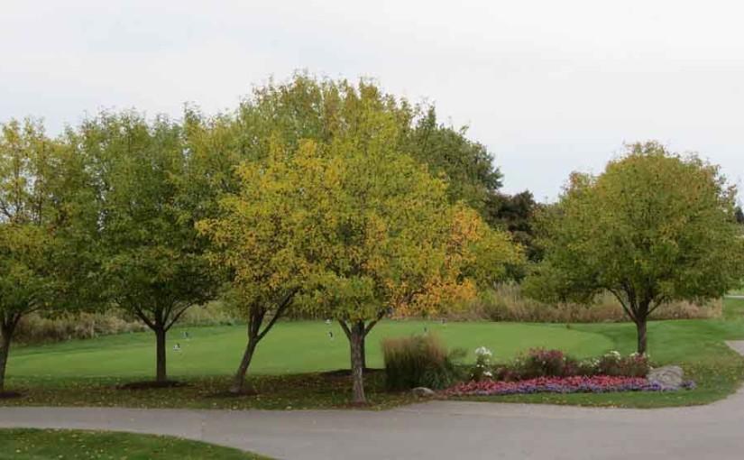 الأشجار السلطعون أبل في الخريف