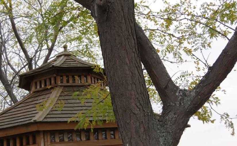 الجراد شجرة من نوع العسل