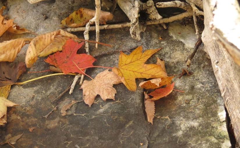 Otoño hojas de arce