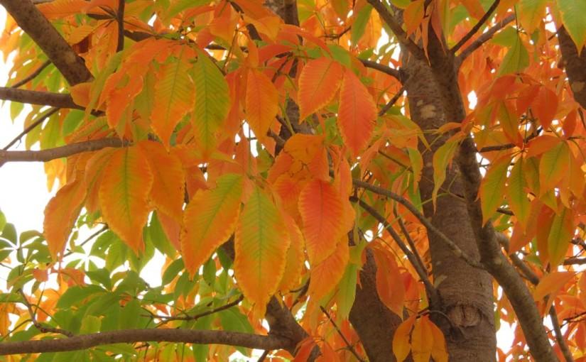 Лист листьев ясеня осенью