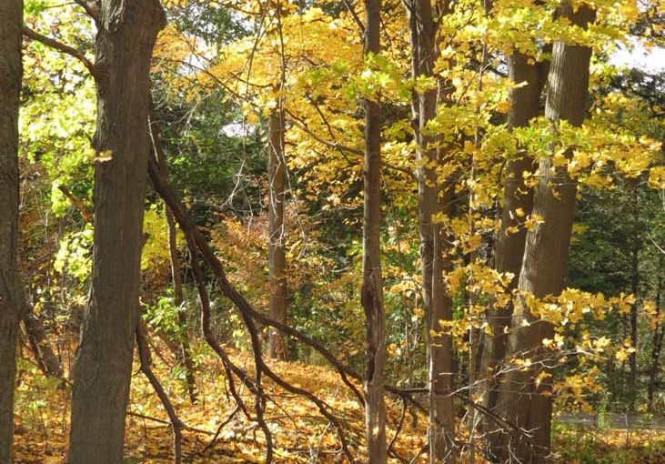 Image de la forêt d'automne