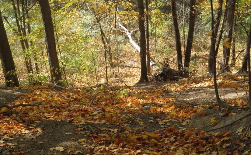 Imagen del bosque de otoño