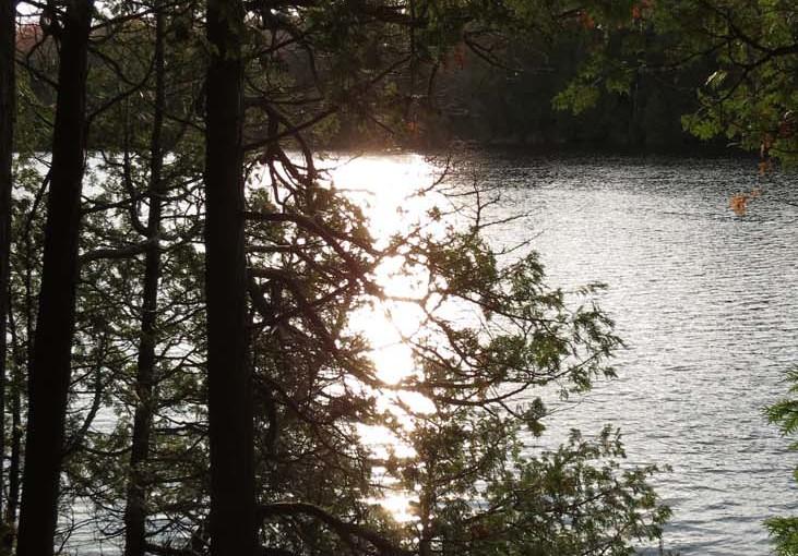 Cedar Tree Evening