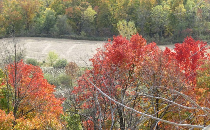 Fall Pictures, Trees on the Escarpment