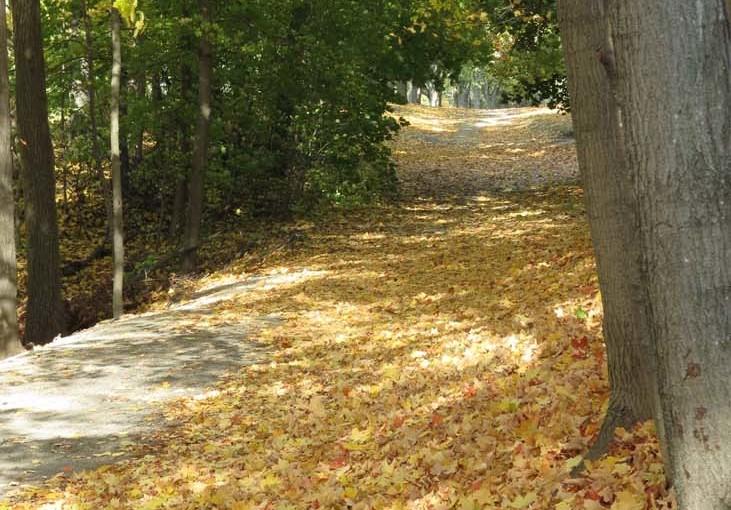 Automne feuilles d'érable