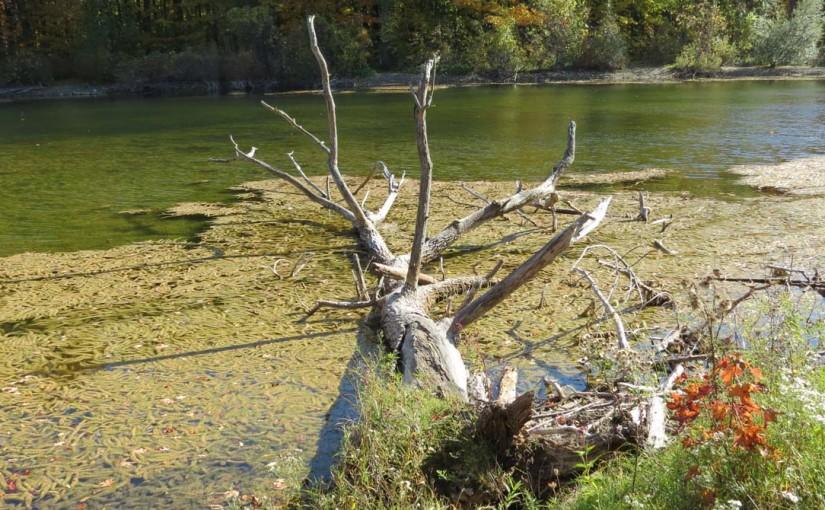 Tree Fallen