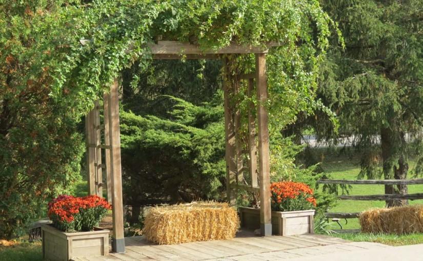 Tree Wedding Photos Venue