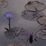 المشهد زنابق الماء تصميم
