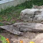 Landscaping Ideas Driftwood