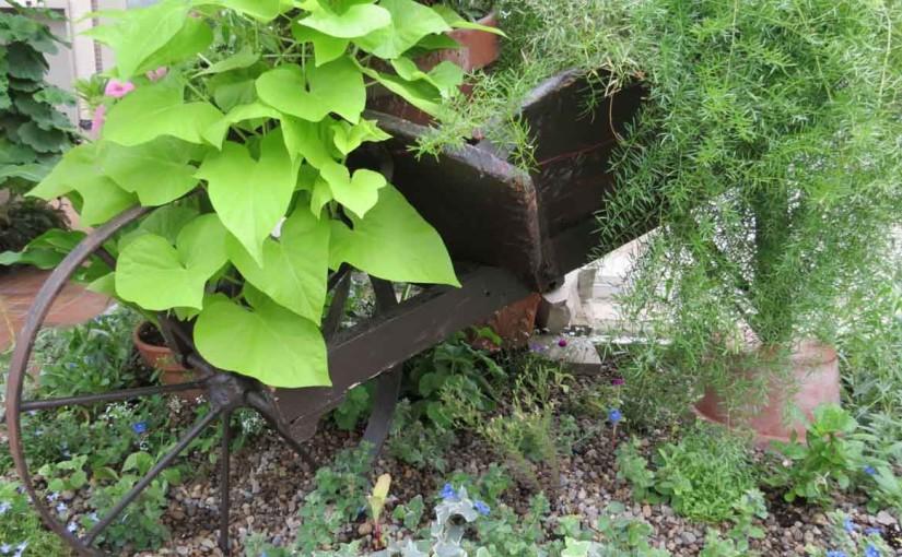 Idées De Jardin Brouette