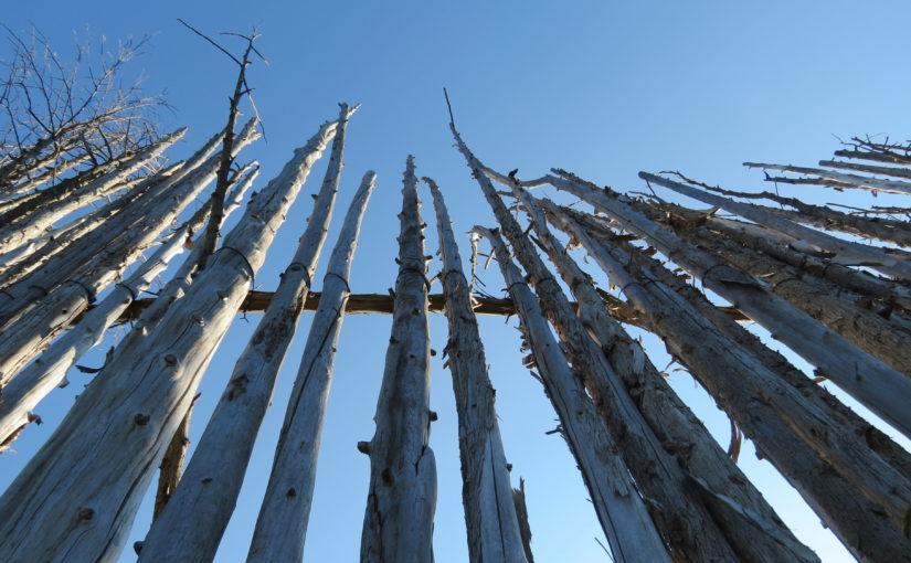 Mur de tronc d'arbre de cèdre