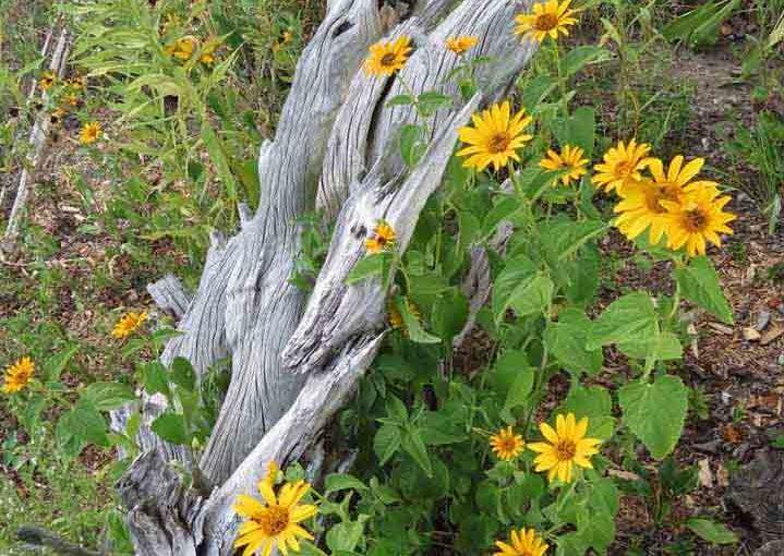 Idées de jardin avec Driftwood