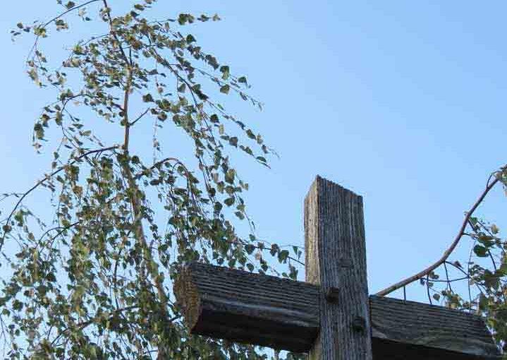 Menangis Birch Tree
