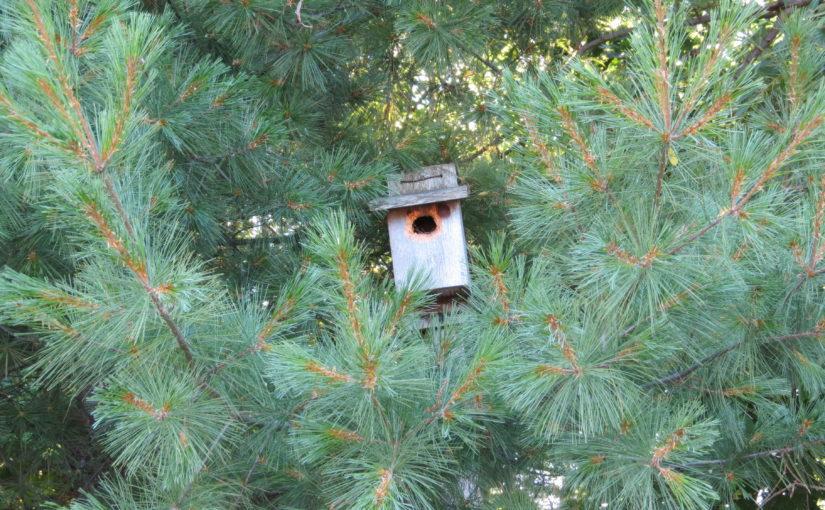 White Pine Tree Birdhouse