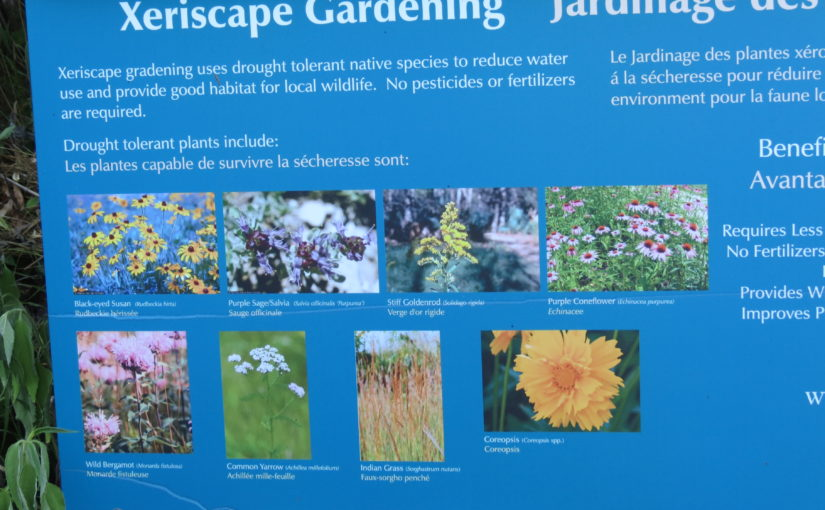 Xeriscape Flower Ideas