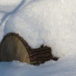 Frêne Log photo d'hiver