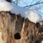 پرندگان اصلی در افرا درخت عکس