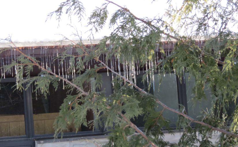 Mengapa menganggap Pokok Cedar?