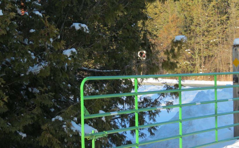 Pokok Cedar di Pintu Masuk