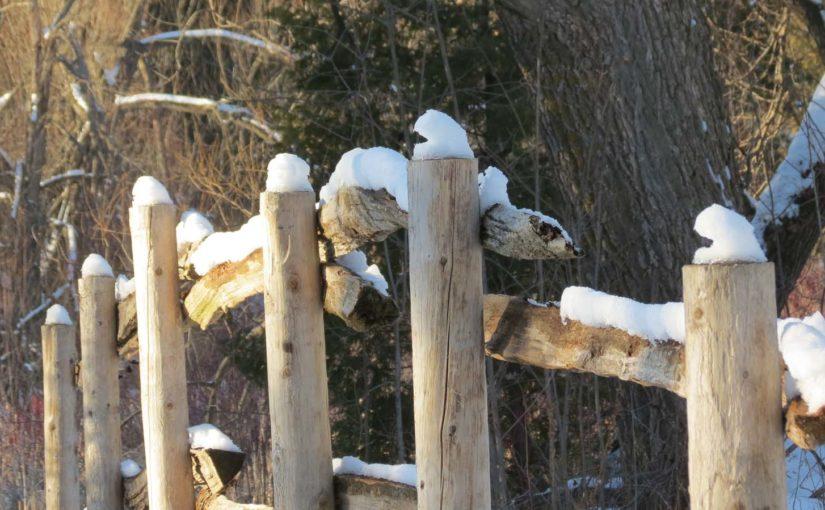 Cedar Tree Fencing
