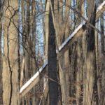Forêt Arbre à feuilles caduques Tombé