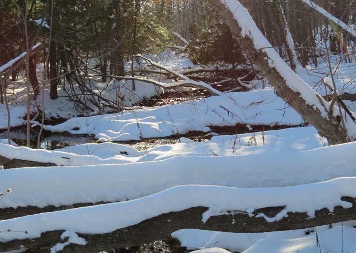 Forest Creek in Snowy Season