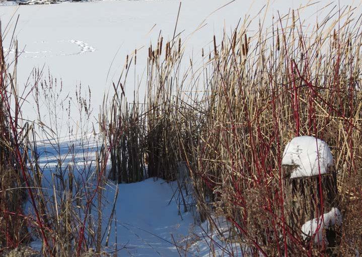Estanque de bosque de invierno