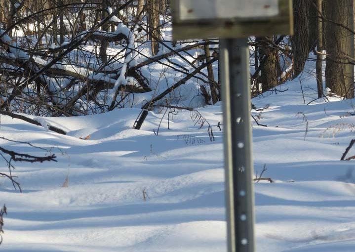 Sentier forestier fermé