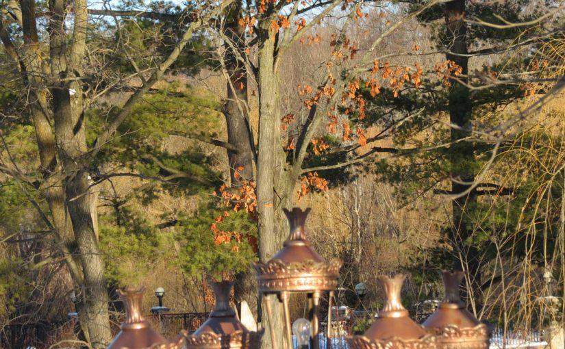 شجرة البلوط الخريف