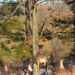 photo de chêne en hiver