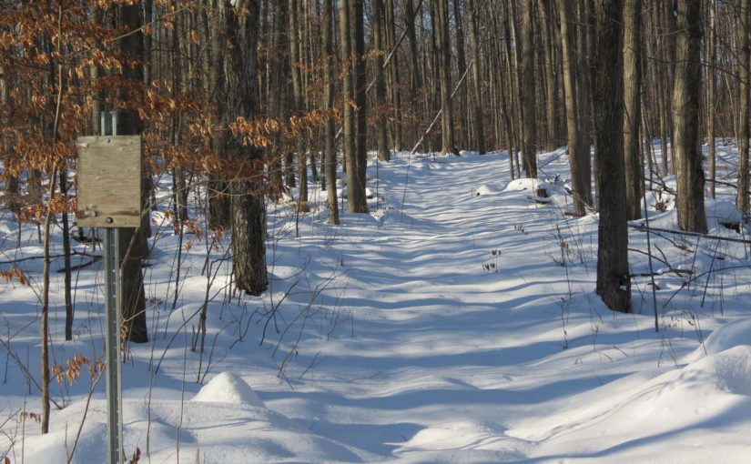 Old Forest Trail in Winter