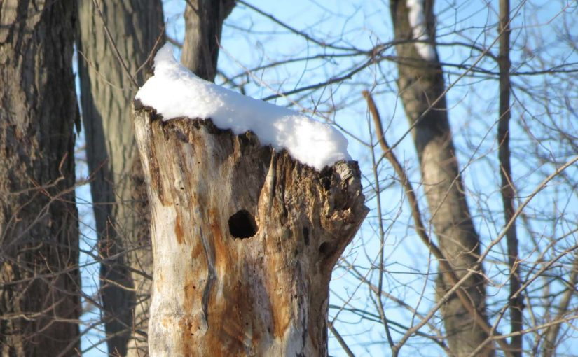 Nevado del árbol de arce