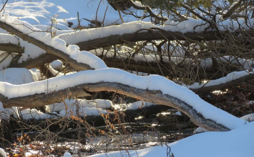 Branches d'arbres Snowy