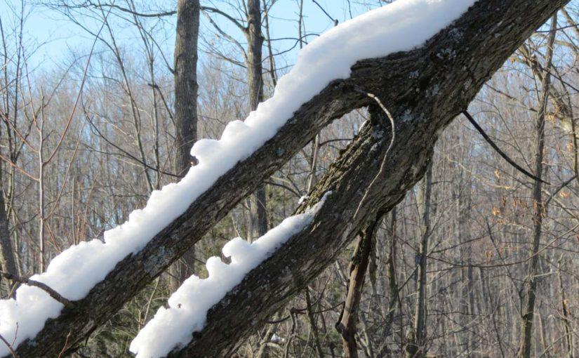Branche d'arbre avec de la neige