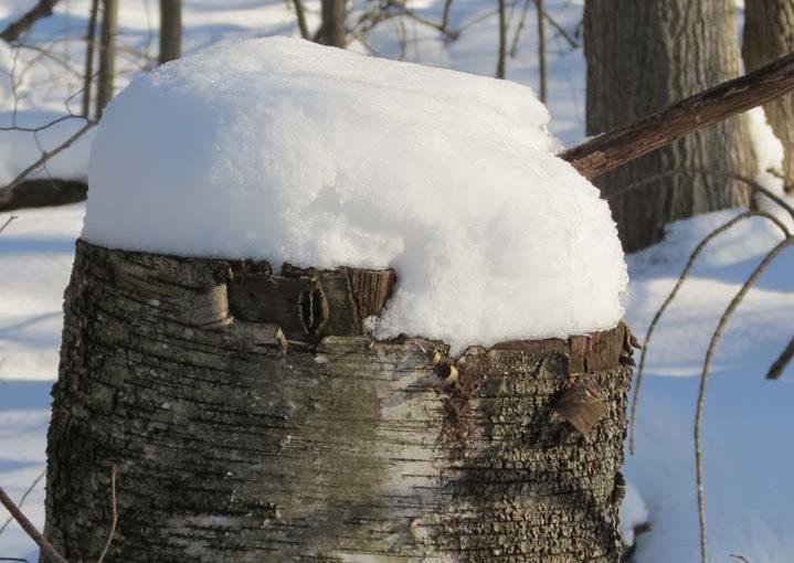 Moignon neigeux