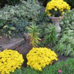 flores de momias en amarillo