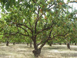 obraz drzewo