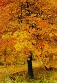 foto pemë