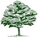 نقشه کشی Butternut درخت، یک درخت Butternut تصویر هنرمند