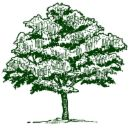 Butternut Pohon Menggambar, A Butternut Pohon Ilustrasi Artis