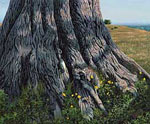 Cypress Tree Trunk Foto