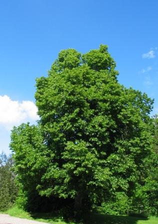 اشجار خضراء2012