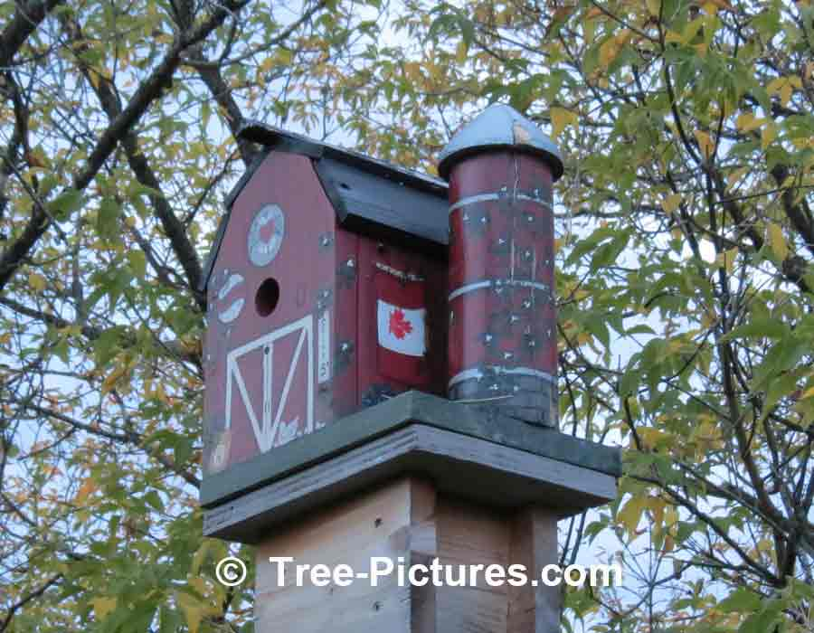 Bird Houses Creative Birdhouse Designs