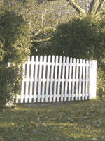Cedar Tree Hedge with white gate Picture
